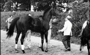 Ruffian going into horse ambulance
