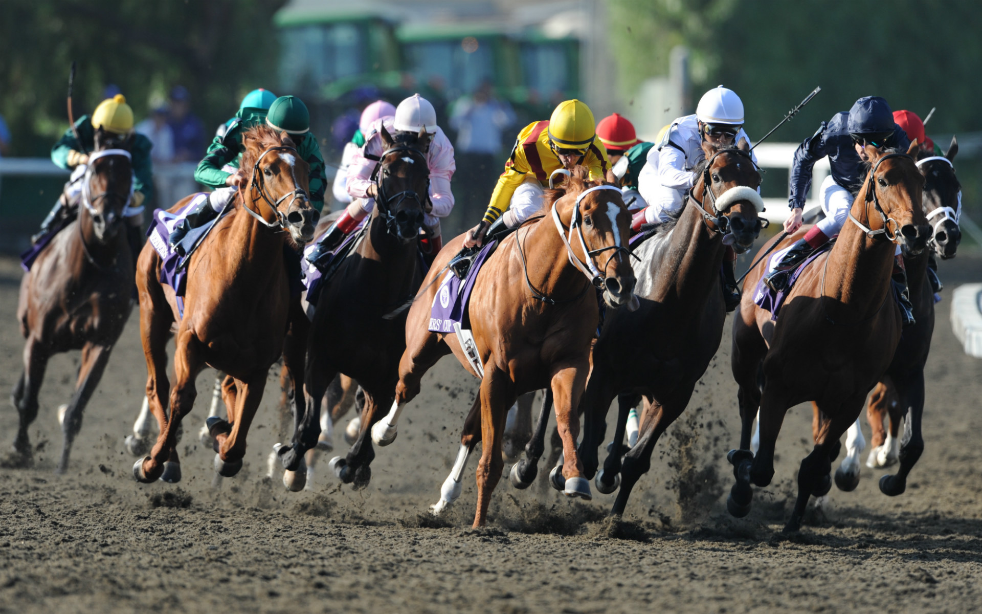 Horses Racing Towards Camera