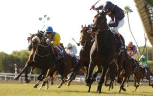 Horses Racing Towards Camera