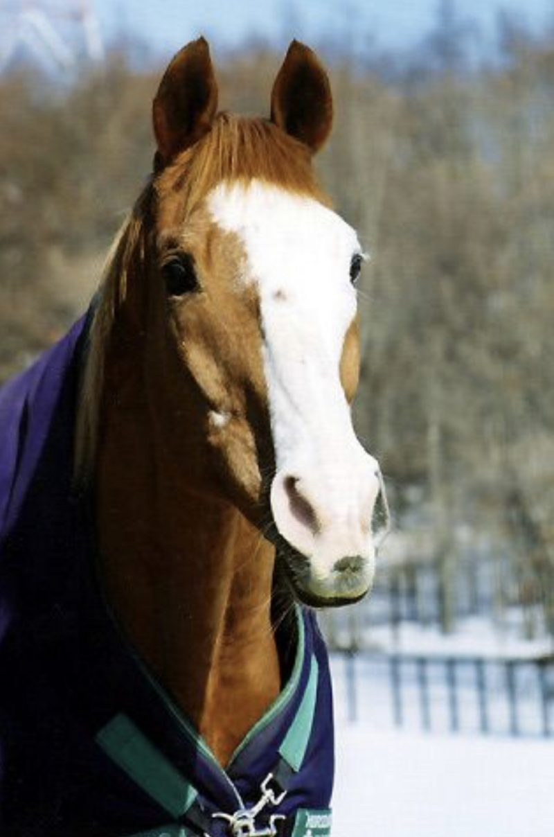 Stallion Dynasties: Northern Taste by Kaitlin Free - Past The Wire